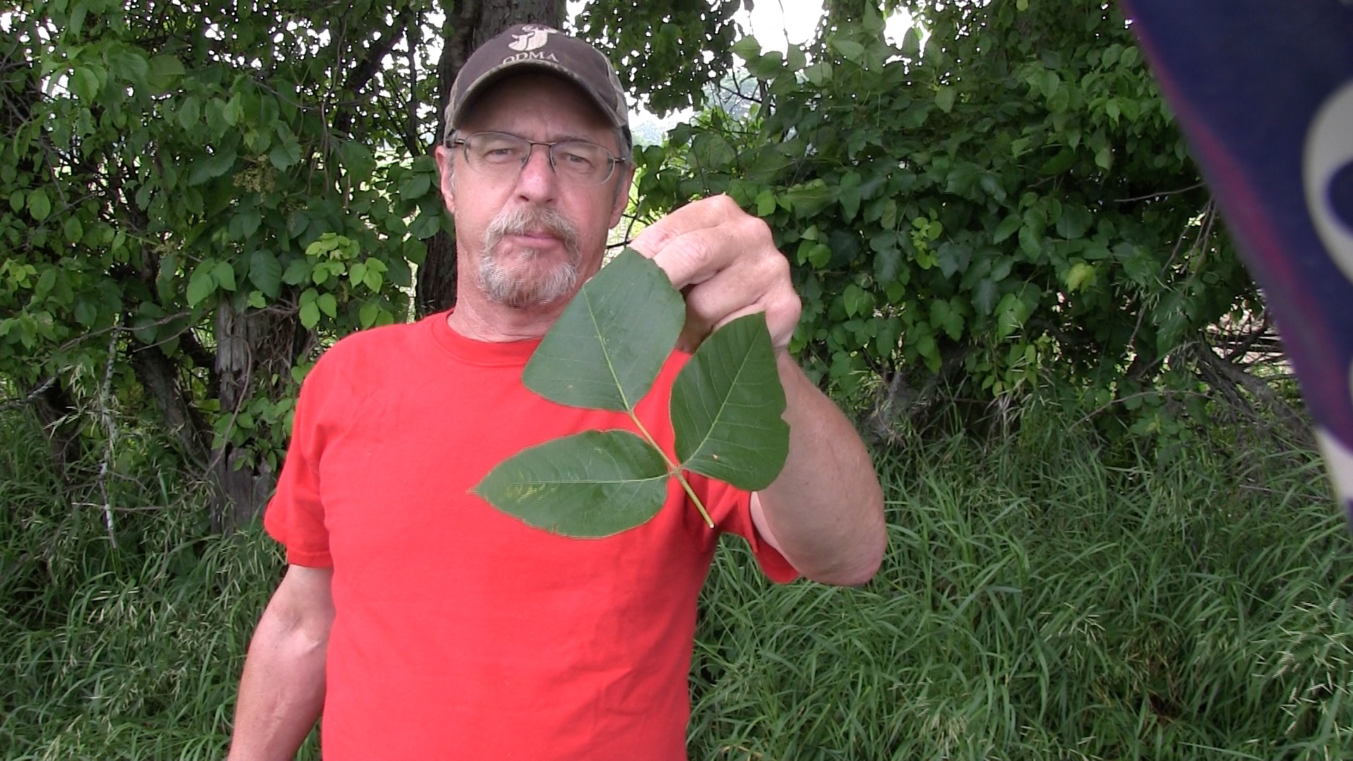 Holding Poison Ivy