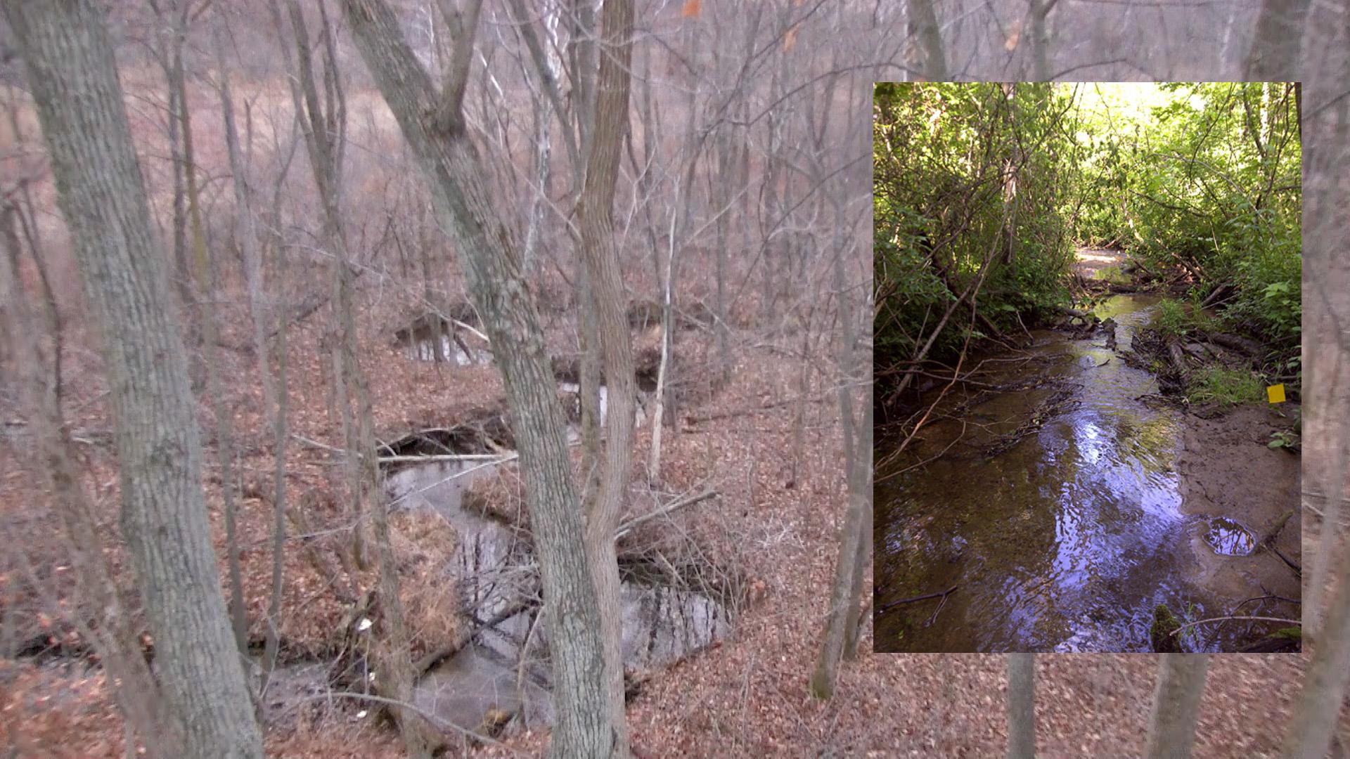 Edh Property For Sale Extreme Deer Habitat
