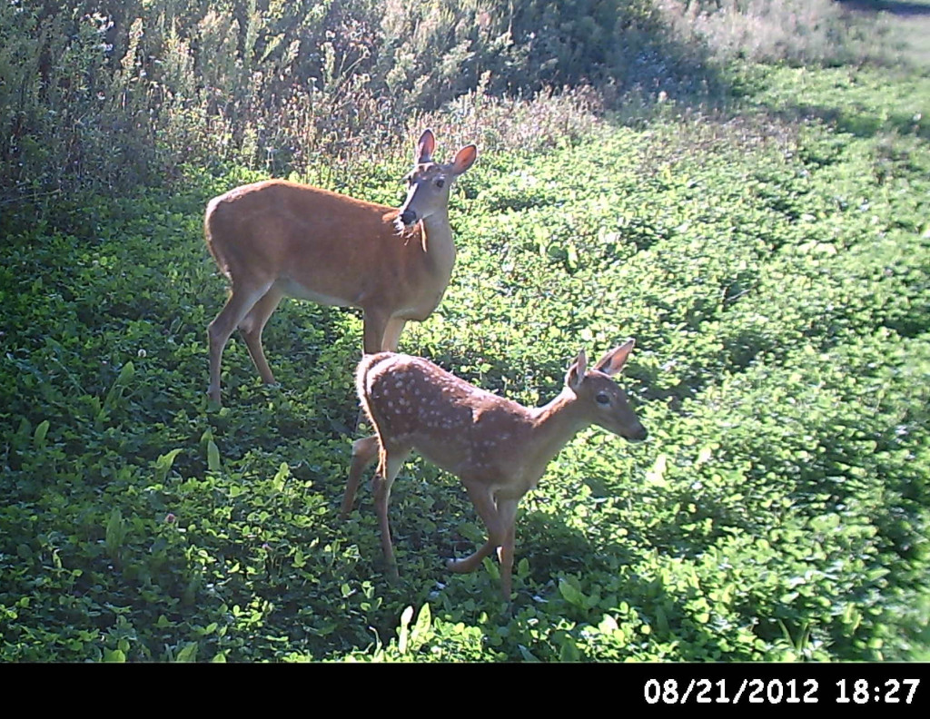 doe and fawn final 1024x792 EDH Property for Sale